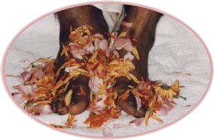 GG_swamiji_feet_website
